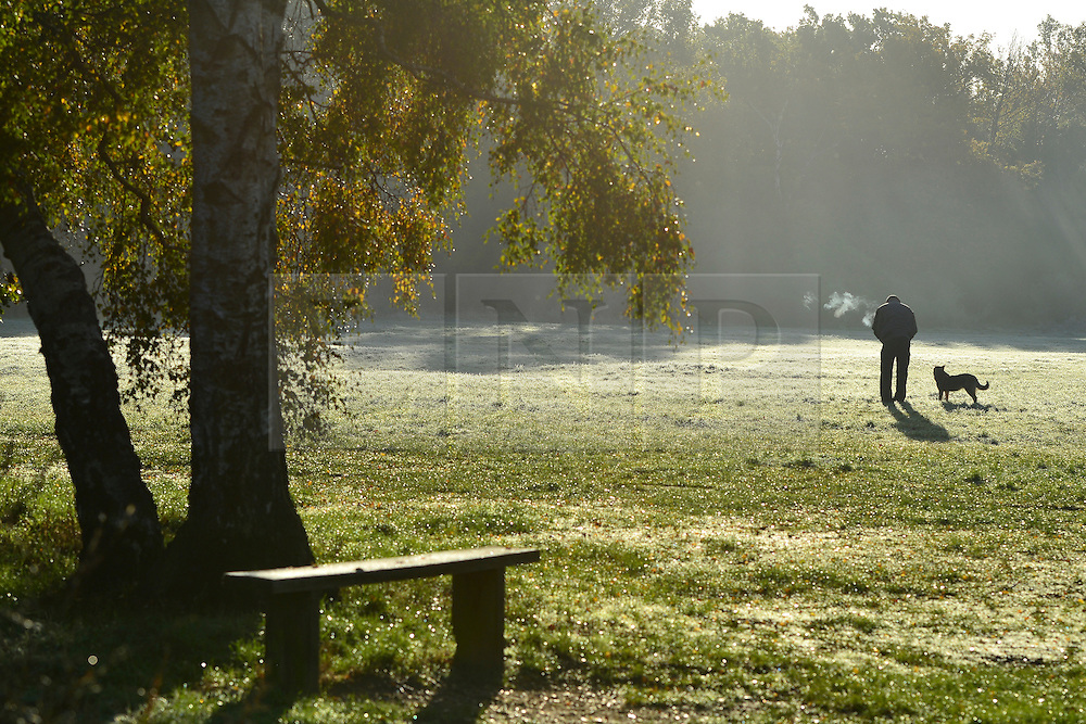 © Licensed to London News Pictures. 13/11/2013. Burnham, UK. A man walks his dog. Autumn sunshine through the trees at Burnham Beeches, South Buckinghamshire on WEDNESDAY 13TH NOVEMBER. The beeches covering 220 hectares is primarily noted for its ancient beech and oak pollards. Photo credit : Stephen Simpson/LNP