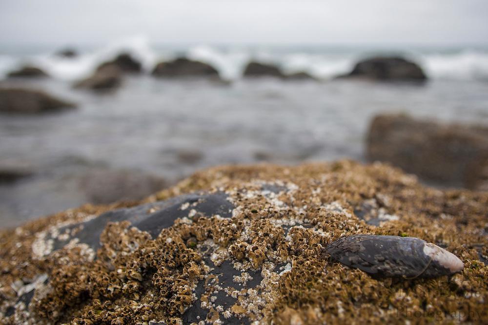Coronado Island California on April 24, 2012. (photo - Mat Boyle)