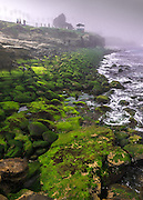 Foggy Morning at Rocky Point in La Jolla of San Diego