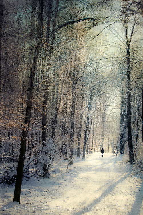 Person walking through a sunlit winter forest.<br />