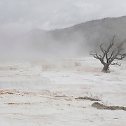 Lone Dead Tree - Mammoth Terrace Hot Springs - Yellowstone National Park