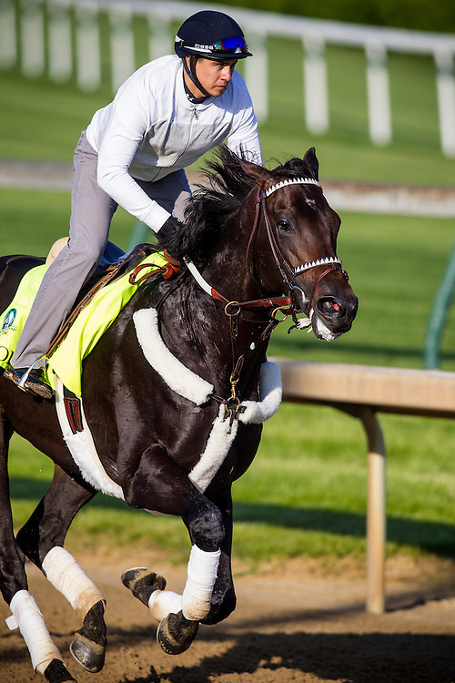 April 29, 2015: Bolo gallops in preparation for the Kentucky Derby at Churchill Downs Louisville Ky. Alex Evers/ESW/CSM