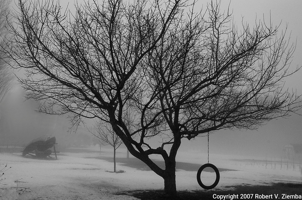 """Tree and Tire Swing""-A black and white image of a yard tree in the fog with a tire swing attached."
