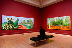"© Licensed to London News Pictures. 06/02/2017. London, UK. A staff member views (L to R) ""May Blossom on the Roman Road"" and ""Woldgate Woods, 6 & 9 November"" at the preview of the world's most extensive retrospective of the work of David Hockney at the Tate Britain, which will be on display 9 February to 29 May 2017. Photo credit : Stephen Chung/LNP"