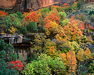 Autumn foliage and striated cliffs, Zion Canyon, Zion National Park, © 1998 David A. Ponton