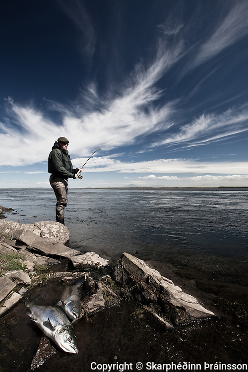Salmon fishing in West Rangá, south Iceland