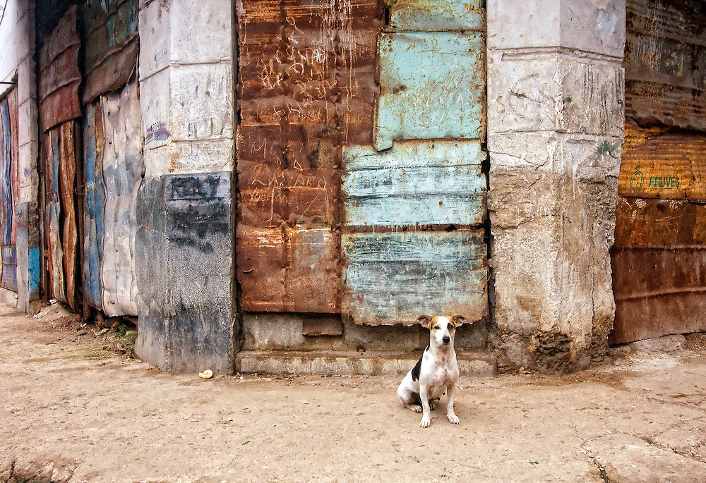 Dog and iron wall in Havana Centro, Cuba.