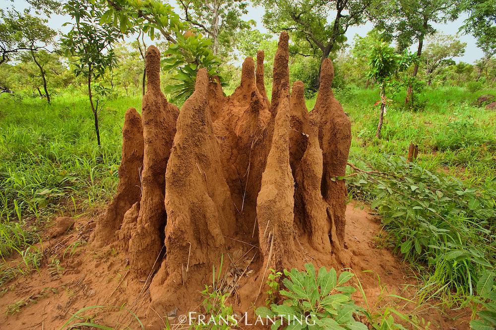 Termite mound, Mole National Park, Ghana