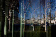 Reflected and distorted cityscape of birch saplings and the City of London on opposite side of the Thames.