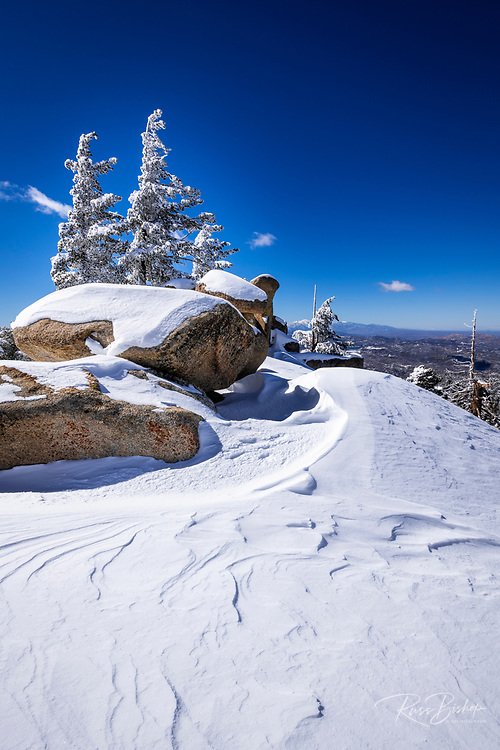 Wind-blown snow and rime ice on pines in the San Bernardino Mountains, San Bernardino National Forest, California USA
