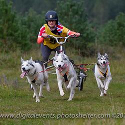 Ds 2-3 Huskies