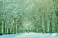Central Park, New York City, New York, Manhattan, Poets Alley, Snow, The Mall