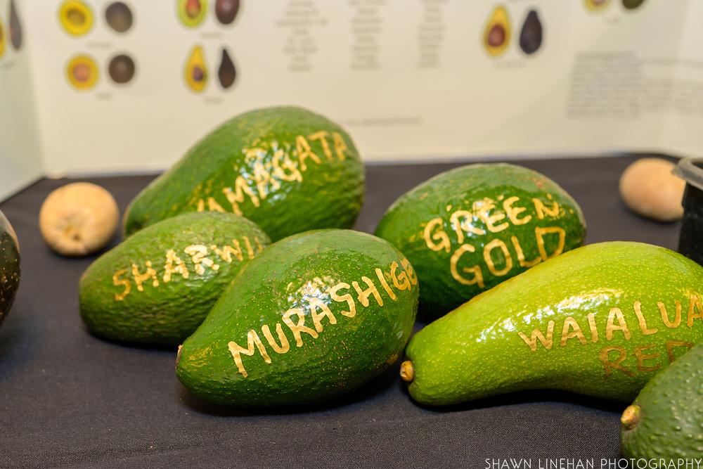 AVOCADO<br /> Curators: Daniel Carrol, Hua Orchards + Barels Avocados<br /> Chef: Remy Maylott, Coffee Gallery & The Breadshop<br /> Daniel and Remy have been growing avocados in Waialua since 2013. They grow over 12 varieties of avocado including Malama, Keoni, San Miguel, Green Gold, Nishikawa, Kahaluu, Semil 34, Yamagata, Sharwil, Murishige, Fujikawa, and Hass.