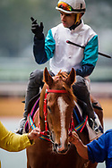 Gunnison with Joao Moreira at the Barrier Trails at Happy Valley Racecourse on January 20, 2018 in Happy Valley Hong Kong. (Photo: Alex Evers)