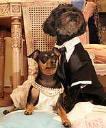 2007 - Dogs Dressed for Wedding
