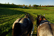 "FLOYD, VA,  Tim Kemph takes his horses for an evening walk in Floyd, Virginia.  ""You have to work them every day, or they get restless.""  Tim uses the horses for environmentally friendly logging."