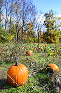 Ohio Pumpkin Patch