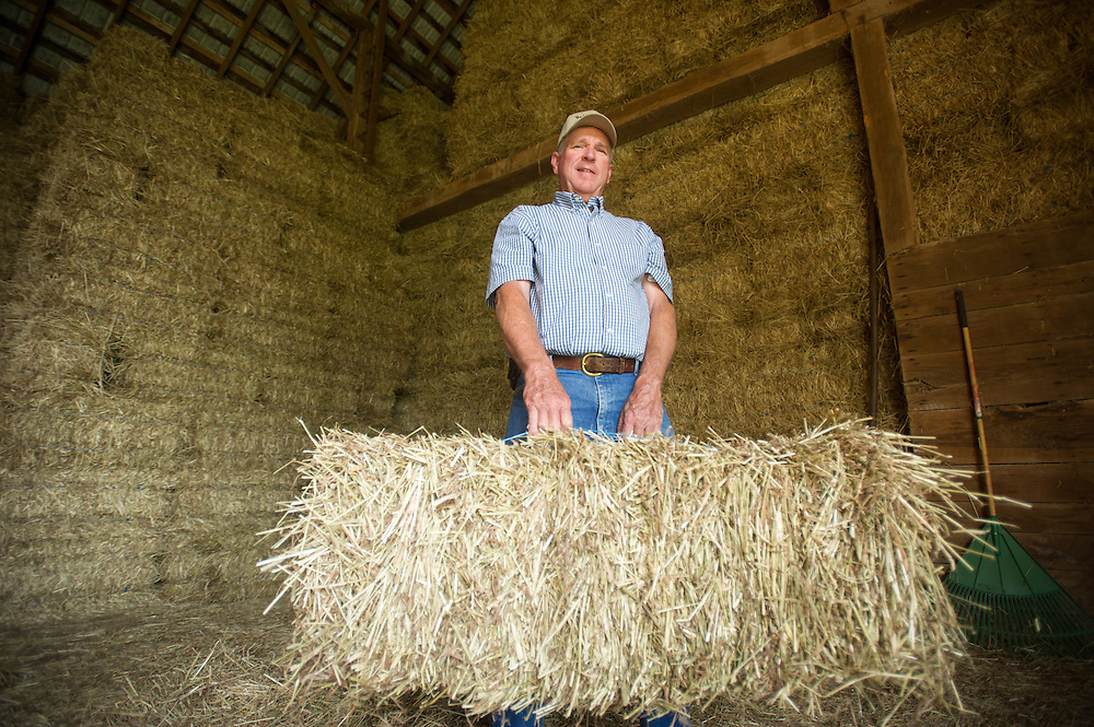 Grain and Beef farmer holding bale of straw<br /> Woodbine MD