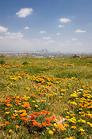 Kenneth Hahn State Recreation Area with Downtown Los Angeles Skyline in Background, California