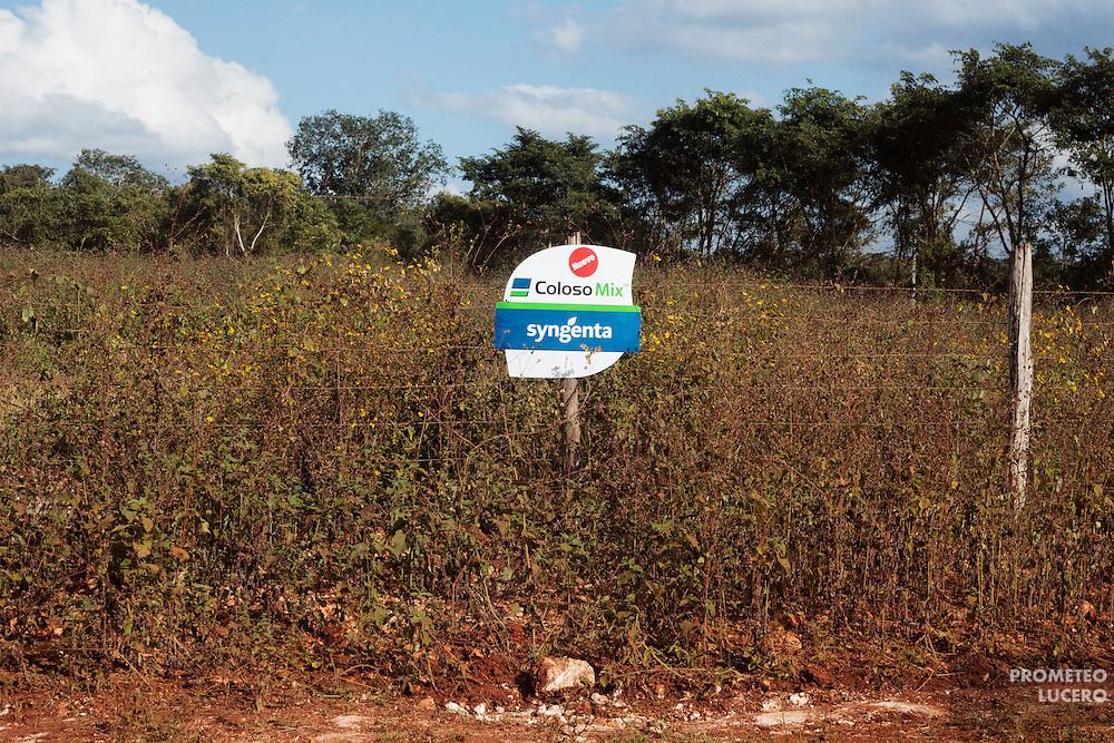 La apicultura maya está amenazada por el uso extensivo de agroquímicos en cultivos (pesticidas y fertilizantes) y por el creciente cultivo de sorgo y soya transgénicos. (FOTO: Prometeo Lucero)