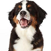 20110427 Puppies