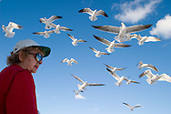 An old woman feeds a flock of seagulls on a beach in Miami Beach, Florida