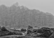 Fleuve Oyapock, Saut Maripa, Guyane, 2015.<br /> <br /> En 1930, un d&eacute;cret divise le territoire guyanais en deux entit&eacute;s administratives distinctes : la Guyane fran&ccedil;aise, le long de la bande c&ocirc;ti&egrave;re jusqu&rsquo;&agrave; 60 km &agrave; l&rsquo;int&eacute;rieur des terres et le &ldquo;Territoire de l&rsquo;Inini&rdquo;, qui couvre 90% de la colonie guyanaise au sud de cette ligne. Cette division officialise la coexistence des deux espaces : le Littoral structur&eacute; par la colonisation fran&ccedil;aise et l&rsquo;Int&eacute;rieur jamais totalement ma&icirc;tris&eacute;. Pour le gouvernement en place, il s&rsquo;agit de cr&eacute;er une colonie dans la colonie pour organiser directement l&rsquo;exploitation de l&rsquo;Int&eacute;rieur en le soustrayant &agrave; l&rsquo;agitation politique locale qui ne concerne plus que le littoral. Le territoire de l&rsquo;Inini est plac&eacute; sous le contr&ocirc;le direct du sous-pr&eacute;fet de Saint-Laurent du Maroni qui joue le r&ocirc;le de gouverneur. Cette nouvelle entit&eacute; englobe les territoires de trois peuples am&eacute;rindiens de Guyane, les Wayana, les Way&atilde;mpi et les Teko &agrave; qui on permet de vivre selon les r&egrave;gles de leur droit coutumier. La circulation dans le sud du territoire est soumise &agrave; l&rsquo;autorisation pr&eacute;alable.<br /> <br /> En 1946, la colonie devient d&eacute;partement. Le nouveau DOM reste s&eacute;par&eacute; en deux arrondissements : celui de Cayenne, qui correspond au littoral, et celui de l&rsquo;Inini qui reprend les limites du &ldquo;Territoire de l&rsquo;Inini.&rdquo; En 1969, &agrave; l&rsquo;occasion d&rsquo;un nouveau d&eacute;coupage administratif du territoire guyanais en deux arrondissements Est et Ouest, l&rsquo;Int&eacute;rieur est int&eacute;gr&eacute; au d&eacute;partement. En 1970, motiv&eacute; par des justifications culturelles, sanitaires et s&eacute;curitaires, un arr&ecirc;t&eacute; pr&eacute;fectoral d&ea