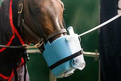 Flexineb Equine Inhaler<br /> Knokke Hippique 2019<br /> © Hippo Foto - Sharon Vandeput<br /> 30/06/19