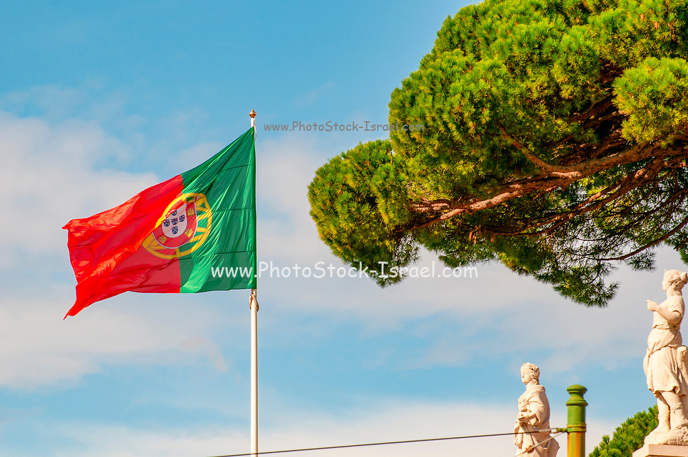 Green and red Portuguese flag blows in the wind with a blue sky background and pine tree. Photographed in Belem, Lisbon, Portugal