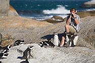 A man sits on a rock and shoots video of African penguins at Boulders Beach, South Africa. http://www.gettyimages.com/detail/photo/man-shooting-video-of-african-penguins-high-res-stock-photography/89037897