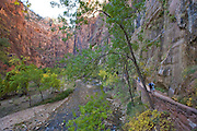 Riverside Walk, Zion National Park, Utah