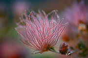 Flower transforming