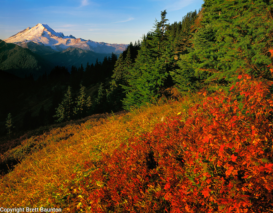 Mt Baker Wilderness Area; Mt. Baker Sunrise from Winchester Mountain; Fall Color,