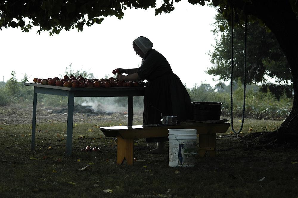 R&eacute;colte des tomates. Les Petersheim, install&eacute;s comt&eacute; de Clark depuis quatre g&eacute;n&eacute;rations, ont onze enfants de 5 &agrave; 23 ans. Pendant l'&eacute;t&eacute;, alors qu'il n'y a pas &eacute;cole, tous prennent part aux activit&eacute;s quotidiennes de la ferme et des r&eacute;coltes. Sur leur exploitation de 162 hectares, la taille moyenne d'une ferme Amish, ils cultivent de l'avoine, du bl&eacute;, du ma&iuml;s, du soja, du sorgo et du millet en suivant des techniques &eacute;cologiques traditionnelles. Ils ont &eacute;galement 40 chevaux, 25 vaches et un petit &eacute;levage de poules et cochons.<br /> <br /> Tomatoes harvest. The Petersheim, established in Clark county since four generations, have eleven children from 5 to 23 years old. During the summer, whereas the school is closed, all take part in the daily activities of the farm and with harvests. On their exploitation of 162 hectares, average size of an Amish farm, they cultivate oat, wheat, corn, soy beens, sorgo and millet following ecological techniques. They also have 40 horses, 25 cows and a small breeding of hen and pigs.