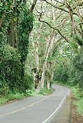 A road on the Big Island of Hawaii winds through the lush tropical vegetation.