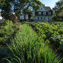 A variety of crops growing at the Garrison-Trotter Farm in the Dorchester neighborhood of Boston, Massachusetts.