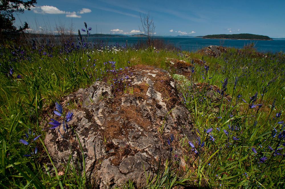 Rock and Wildflowers of Yellow Island, San Juan Islands, Washington, US
