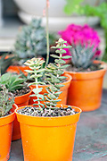 Display of potted succulent house plants