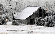 Ice clings to an old barn while a paint horse grazes nearby in Baxter County, Arkansas
