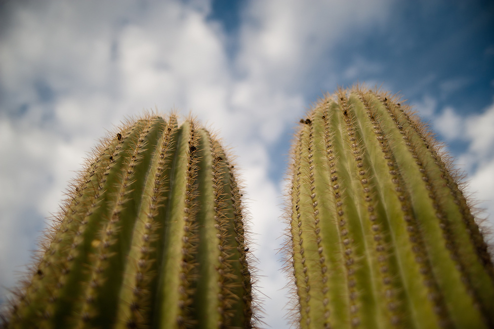 Ventana Canyon , Tucson Arizona