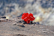 An offering of anthurium flowers to the goddess Pele on the rim of Halema'uma'u Crater, Hawaii Volcanoes National Park, Hawaii