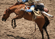 Bareback Rider Tyler Scales scores a 71 riding 13 Hard Luck BR, 28 July 2007, Cheyenne Frontier Days