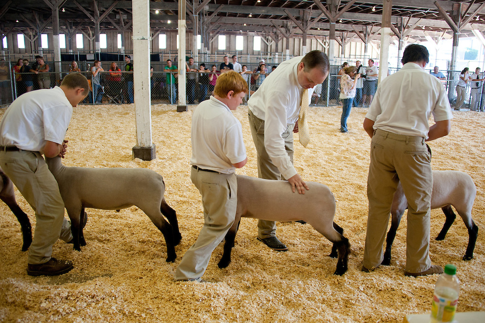 Group of 4-H youth standing in a row inside a pen and judge inspecting their Suffolk sheep at the Maryland State Fair