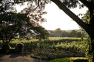 Sula Wines, Nashik, India<br /> COPYRIGHT 2010 CHRISTINA SJ&Ouml;GREN<br /> ALL RIGHTS RESERVED