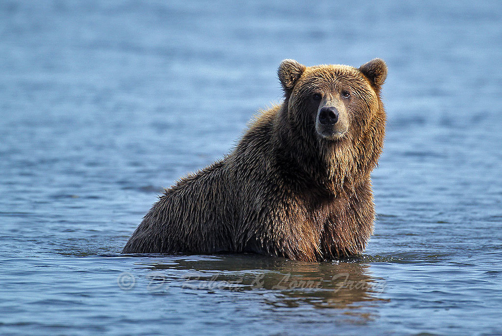 "Images from the 2011 ""Brown Bears of Alaska"" photo tour"