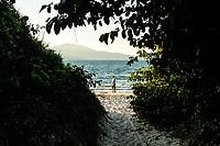 Caminho por entre vegetação de restinga na Praia da Daniela. Florianópolis, Santa Catarina, Brasil. / Pathway through sandbank vegetation at Daniela Beach. Florianopolis, Santa Catarina, Brazil.