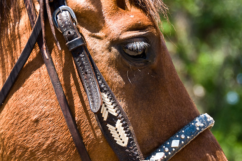 My best bridle