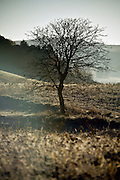 tree silhouetted in rural late autumn season landscape France