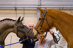 Valegro, Maifleur mother to Valero, Joop en Maartje Hanse, readers of Valegro<br /> Show Life of Valegro<br /> KWPN Hengstenkeuring 2017<br /> © Dirk Caremans<br /> 04/02/17