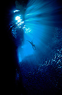 Swimmer in curtain of light in Tongan waters. South Pacific.